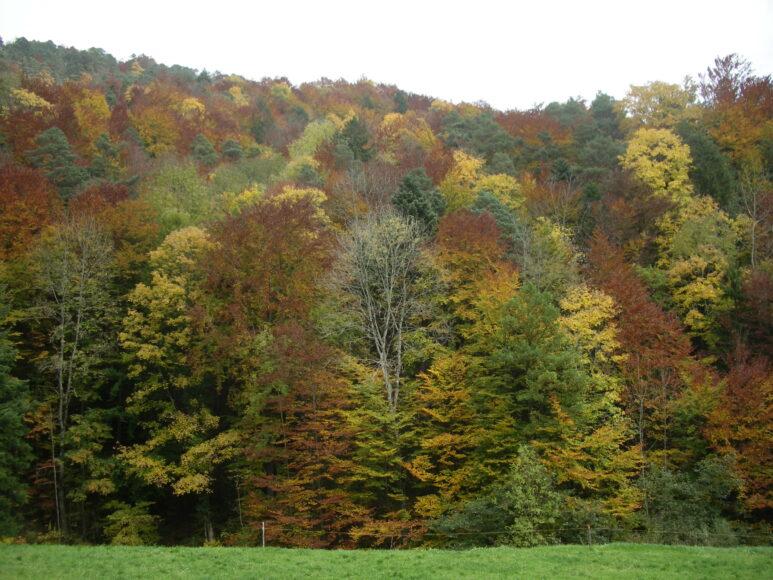 2. Solothurner Waldwanderweg 2