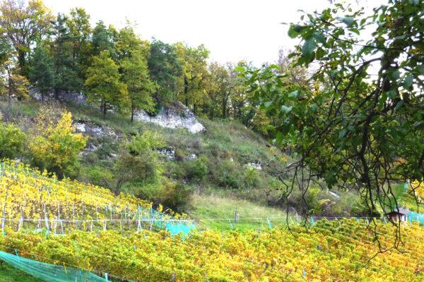 Ruine Tschäpperli im Rebberg des Klustal