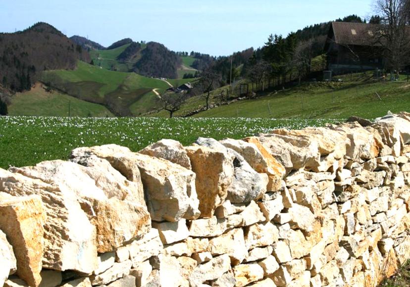 Trockenmauer_Probstenberg